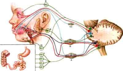Центральные вестибулярные синдромы