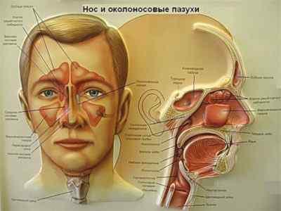 Почему возникает боль и заложенность носа